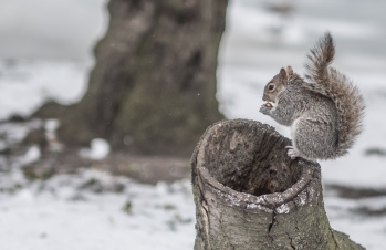 squirell2-8392